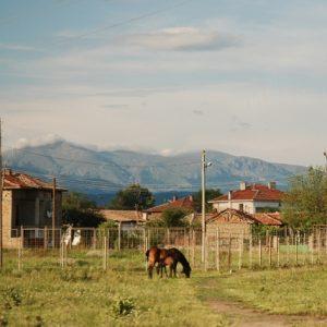 Ein Pferd grast im Tal der Rosen