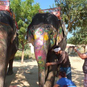Elefanten werden begrüßt