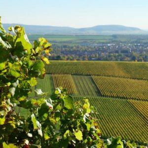 Herbstlich gefärbte Weinberge bei Wiesenbronn