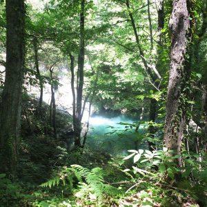 Naturwasserbecken im Wald