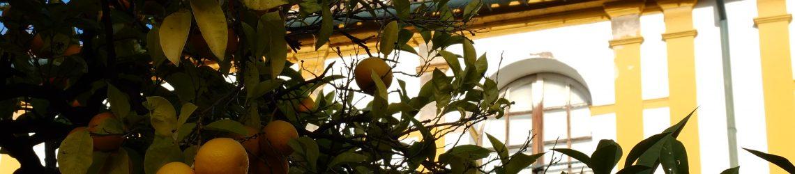 Ein voll behangener Orangenbaum vor einem typischen Sevillaner Gebäude