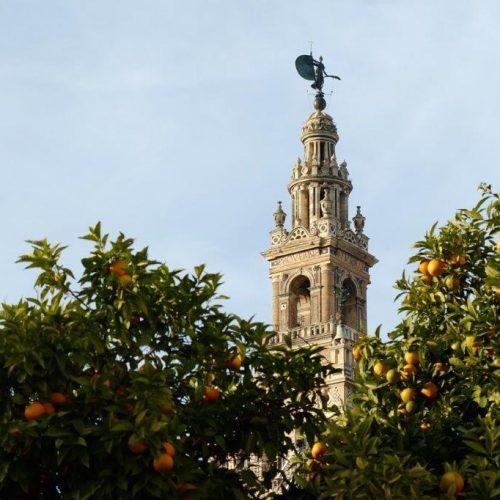Der Kathedralen-Turm Giralda umgeben von Orangenbäumen