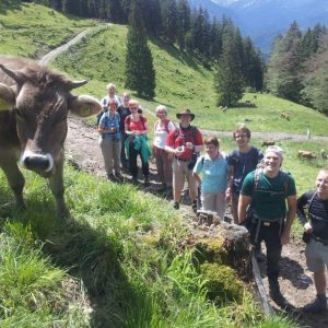 Gruppe mit Allgäuer Milchkuh auf Wanderweg