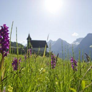 Das kleine Bergkirchli von Arosa. Im Vordergrund Wiesenblumen