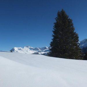Ein Tannenbaum im weiß beschneiten Bergpanorama