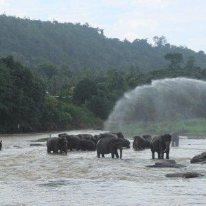 Elefantenbad am Fluss