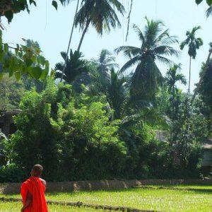 Ein buddhistischer Mönchsschüler im orangenen Gewand läuft an einem Reisefeld entlang