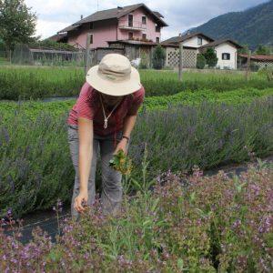 Auf der Kräuterfarm von Stefania
