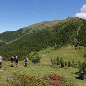 Eine Wandergruppe besteigt den berg Panarotta. Im Vordergrund sieht man blühende Alpenrosen