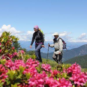 Zwei Wanderer laufen hinter einem Busch von Alpenrosen. Im Hintergrund sieht man Bergpanorama