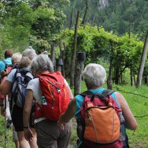 Eine tour de sens Gruppe (von hinten) wandert an Reben vorbei durch das üppig grüne Valsugana