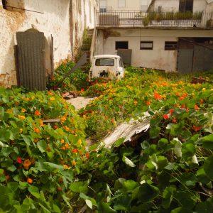 Ein alter Fiat im Blumenmeer