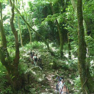 Wanderer im grünen Bergwald
