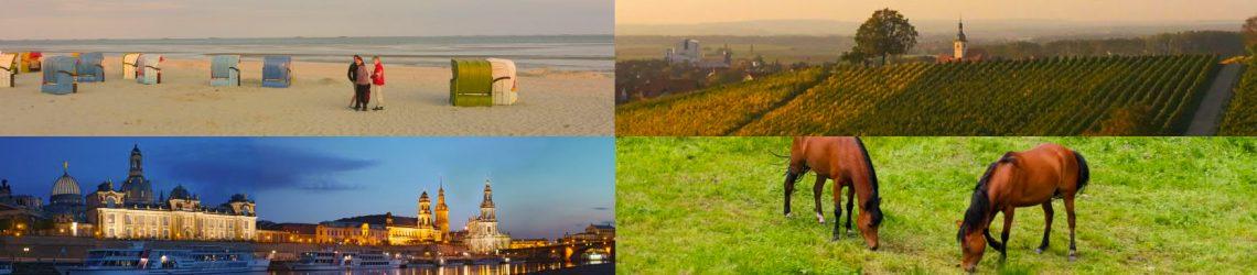 Fotocollage: Nieblumer Strand auf Föhr, Weinberge, Skyline von Dresden und weidendes Pferd