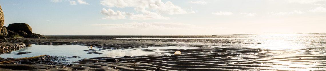 DAs Watt aus der Froschperspektive: Welenförmige Sandformationen und kleine Prile