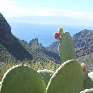 Oppuntien mit Kaktusfeigen im Vordergrund. Grüne berge und blaues Meer im Hintergrund