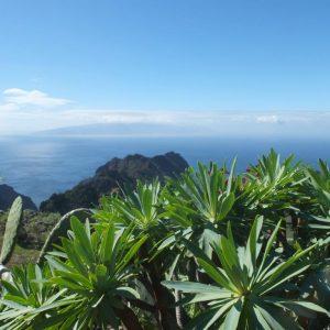 Grüne Dickblattgewächse und Oppntien im Vordergrund. Berge, Meer und die Insel La Gomera im Hintergrund.