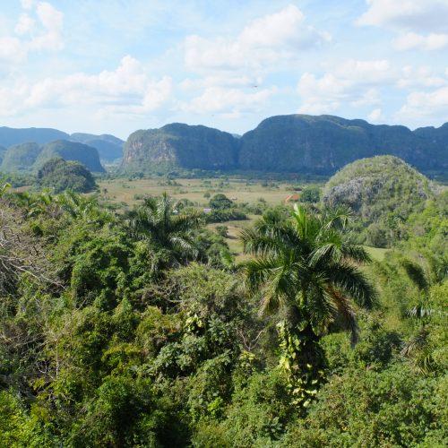 Die Kalksteinkegelberge von Vinales mit üppigem Grün und Tabakfeldern