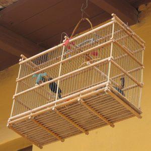 Singvögel in einem Käfig
