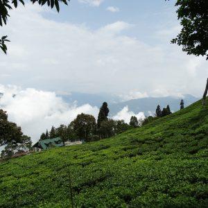 Road Darjeeling Pelling