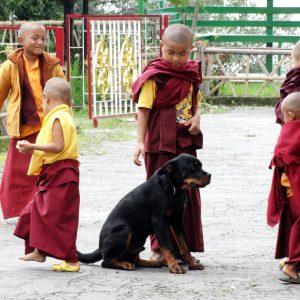Tshuklang Monastery (11r)