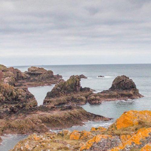 Algen bewachsene Küstenlandschaft im Norden Schottlands