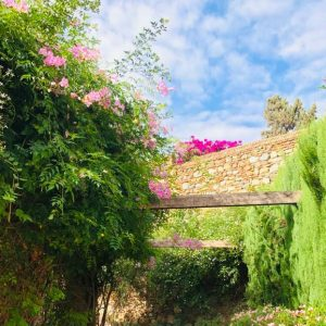 Bouganvillen-Garten in Málaga