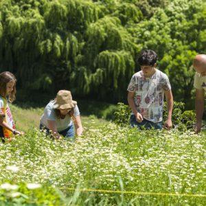 Familie auf der Kräuterfarm beim Kräuterpflücken