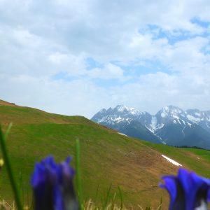Blau-blühender Enzian vor Bergkulisse