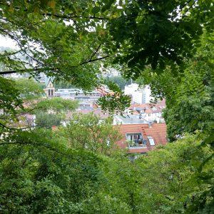 Blick durch grünes Blattlaub auf den Stadtteil Stuttgart-Süd